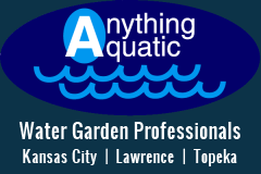 Atlantic | Oase Professional Contractor - Anything Aquatic, Lawrence, KS